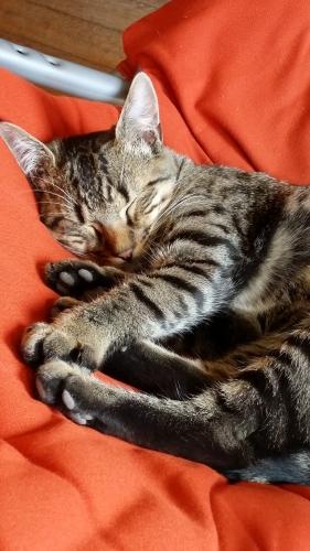 Vive la Vie, blog de femme, femme, femmes, animaux, chat, boogie